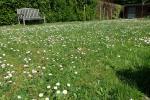 Laat gras hoger worden bij droogte