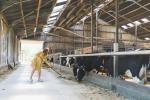 Vijf leuke weetjes over koeien en koeien melken die Amylia bijleerde tijdens haar bezoek aan Bella & Rosita