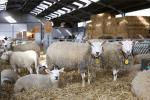 Dagreis schapenhouders Antwerpen 2019