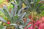 nieuwe warme tuin in Brugge op komst