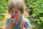 Aardbeien van Op Het Veld