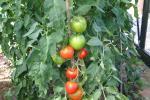 afval bestaat niet: van tomatenstengel tot papier