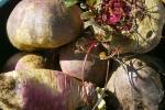 wortelgroenten voor de de wintertuin