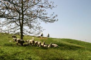 Vorming schapenhouders Boerenbond en Landelijke Gilden 2017-2018