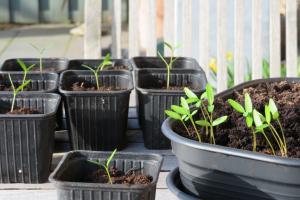 zaaien en planten in de schooltuin