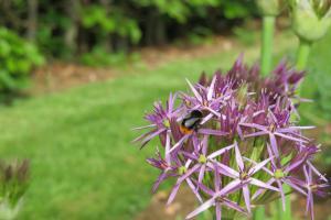 bolbloemen voor bijen