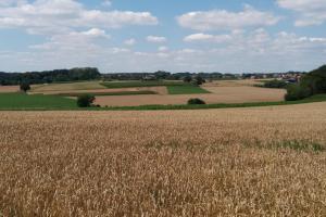 Hageland, gekenmerkt door landbouw.