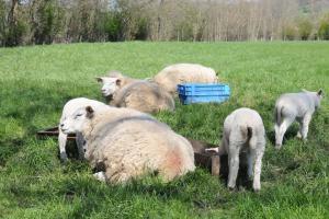 Wolvenschade voorkomen