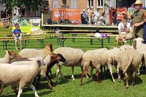 Dagreis schapenhouders Oost- en West-Vlaanderen 2019