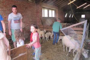 Lammetjeskijkdag Stevoort lammetjes schapen scheren schapen hoeden boerderij