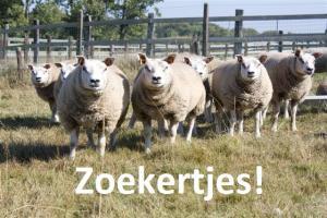 Zoekertjes schapen Landelijke Gilden