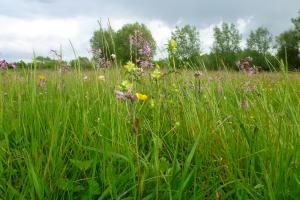 Bijenwandeling langs graslanden