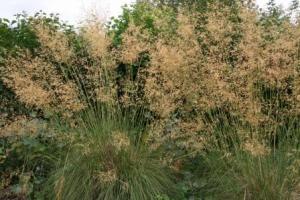 grassen en hooikoorts