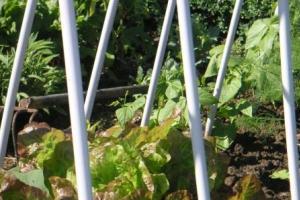 plantensteunen uit eenvoudig materiaal