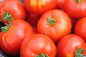 Het is nog even wachten tot de tomaten rijp zijn