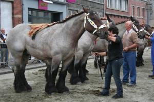 erfgoedtraject Trekpaard