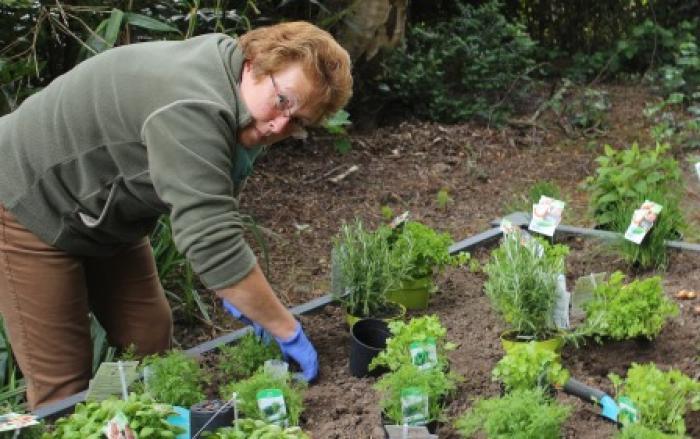 Warme tuin Edegem, vrijwilligster aan het planten