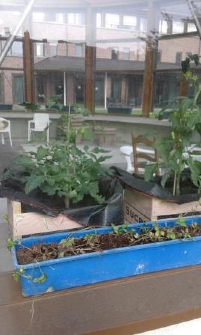 Planten opkweek in warme tuin Engelendale